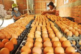 (日本語) 日本の鶏卵を生産するイセ食品株式会社はベトナムでパートナーを探している