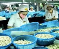 貿易:ベトナム、カシューナッツの輸出量・価格共に増加